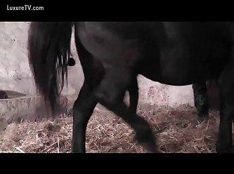 Horse Fucking Slut In Doggy Style