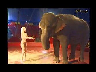 Milly Amorim   Elephant (part 18)